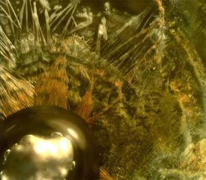 Раствор олова - микроскопически